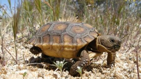 Giving away California desert to renewable energy is still destroying public lands