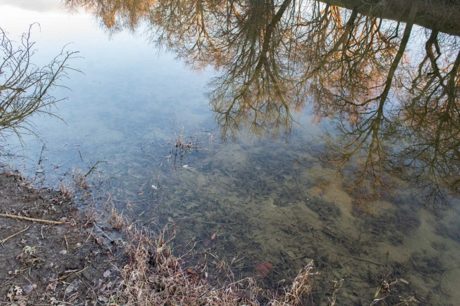 City of Davis offers water conservation tips in light of dry winter