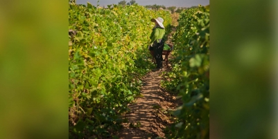 UC Davis launches a $3 million project for farmworkers
