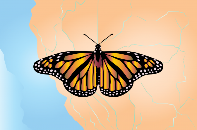Butterfly observations indicate insect populations are declining due to climate change